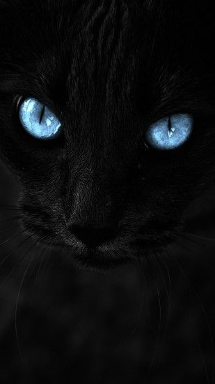 Black Cat, Blue Eyes, Close-up, Muzzle, Cats