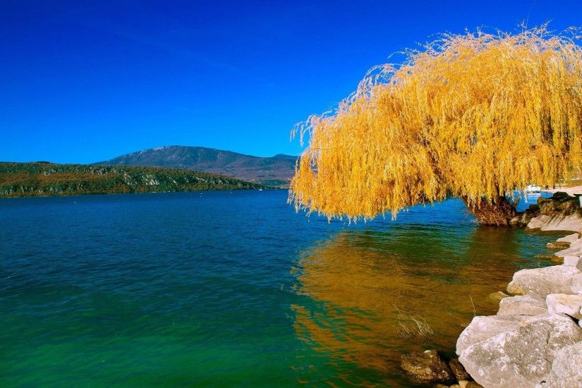 Golden Willow On The Lake Side