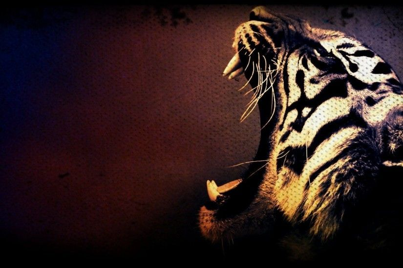 Â« Tiger Desktop Backgrounds HD