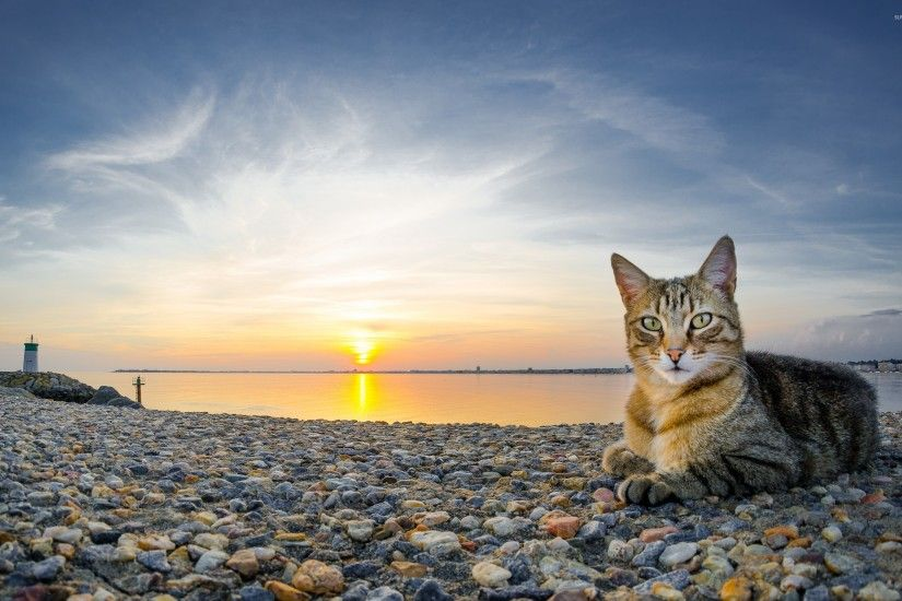 Cat on a rocky sunset beach wallpaper 2560x1600 jpg