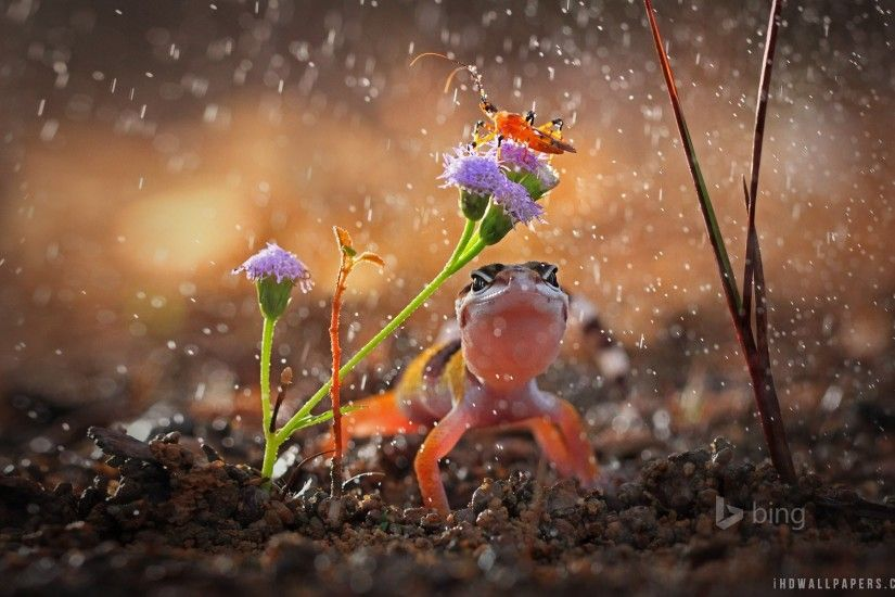 Raining Wallpapers Group 1920×1200 Rainy Day Images Wallpapers (43  Wallpapers) | Adorable