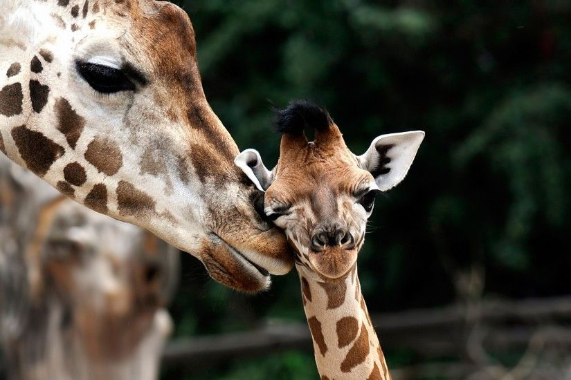 Cute Baby Animal with Mom HD Photos