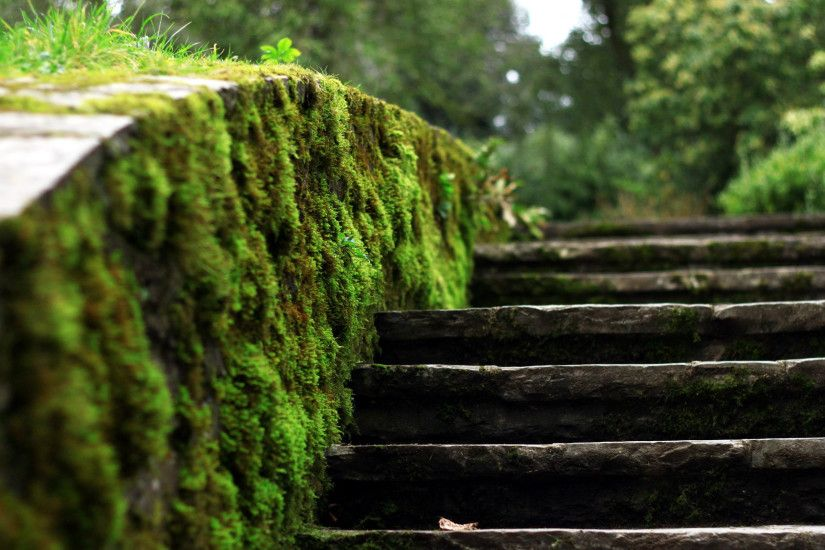 Related Wallpapers from Cool Nature Backgrounds. Moss stairs