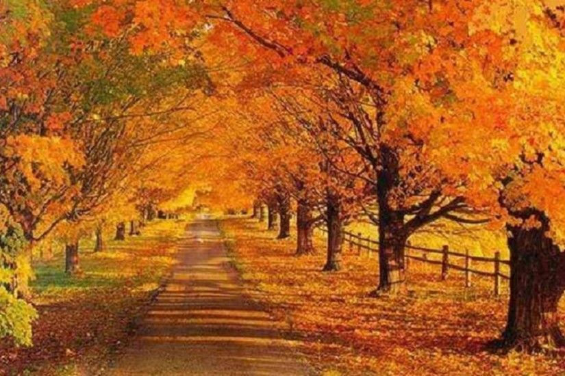 Tree Lined Autumn Road Nature Trees Fence Leaves 1080p Wallpaper - 1920x1080