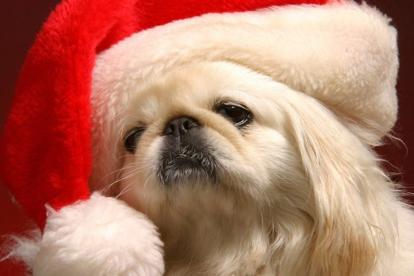 cute christmas puppy pictures wallpaper