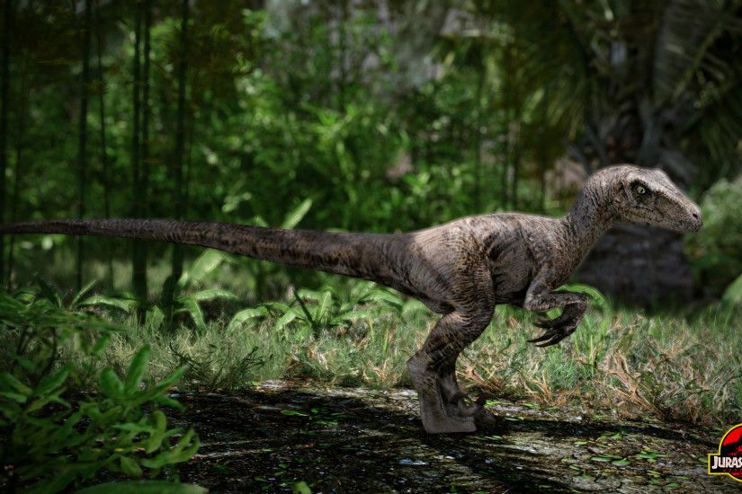 Palaeontology images Velociraptor HD wallpaper and background photos .