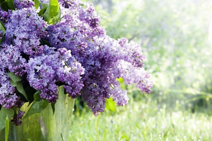 Lilac Purple Flowers HD Photos. Added On