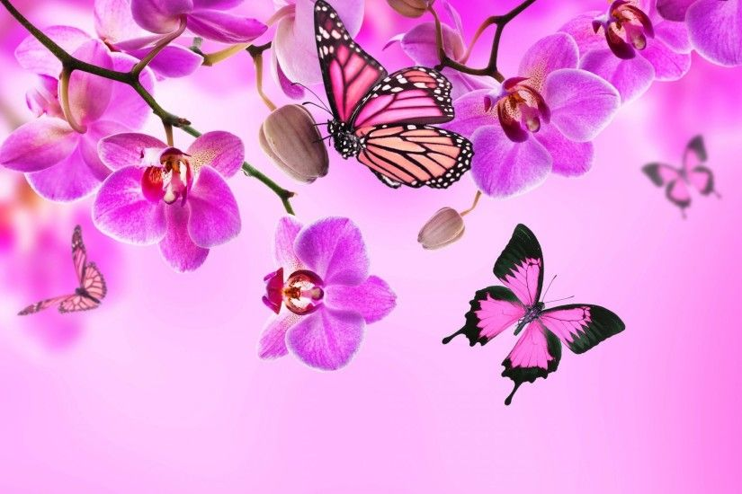orchid pink blossom flowers beautiful butterflies orchid flower butterfly