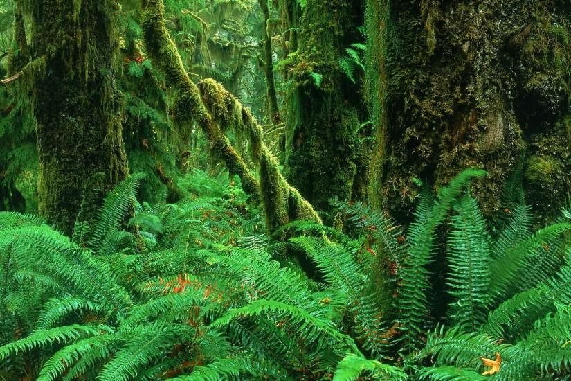 Hoh Rainforest wallpaper - 301239