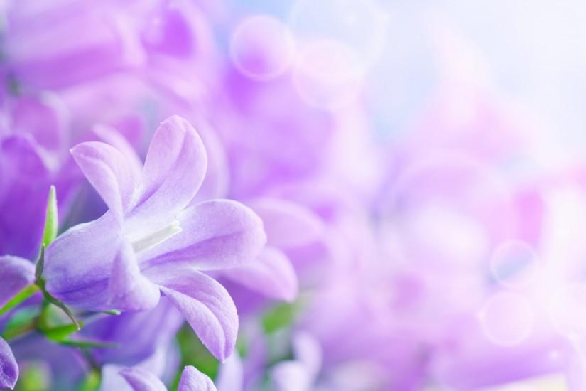 free download lavender wallpaper 2560x1440 photo
