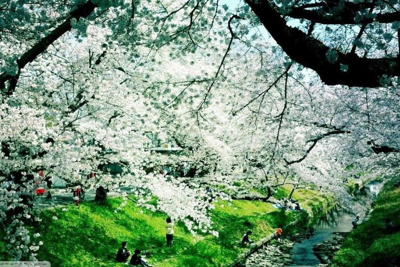 Trees Spring Nature Flowered Flowers Animated Wallpaper Image
