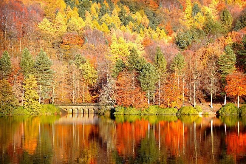 Download Fall Wallpaper wallpaper, 'Fall In Colors'.
