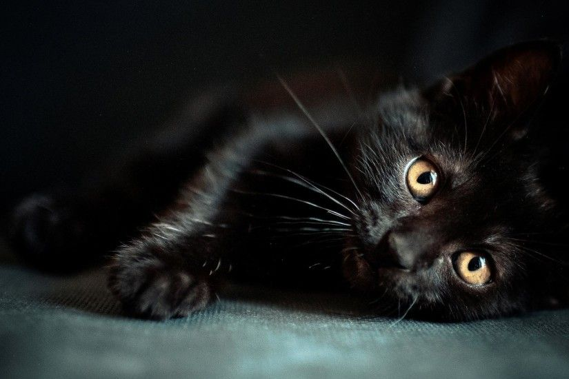 Black Cat Sleep HD Desktop Wallpaper - wallpaper source