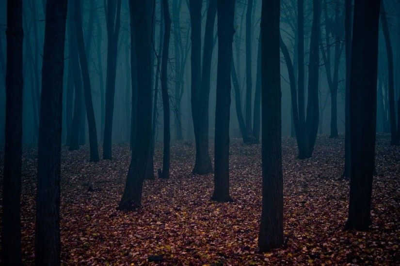 Most Downloaded Dark Forest Wallpapers - Full HD wallpaper search