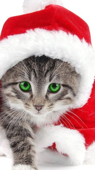 Christmas Cat LG G3 Wallpapers