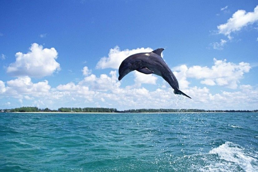 Free Wallpapers Free Animal Wallpapers Dolphin Wallpapers .