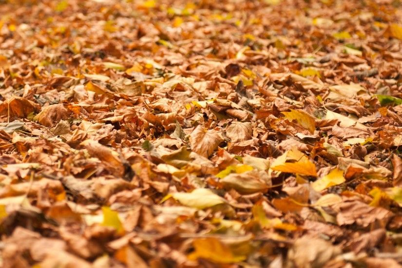 Fall Leaves Background 832957 ...