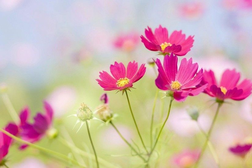 Wallpapers For > Beautiful Flower Background Wallpaper