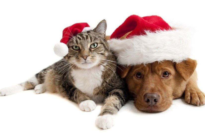 Christmas Cats wallpapers