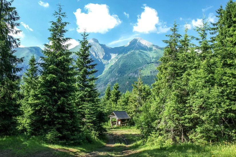 Preview wallpaper mountains, forest, trees, grass, summer 1920x1080