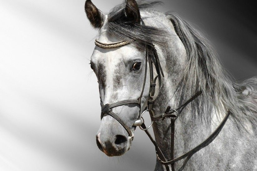 Horse Wallpapers HD Android Apps on Google Play 1920×1440 Images Of Horse  Wallpapers (