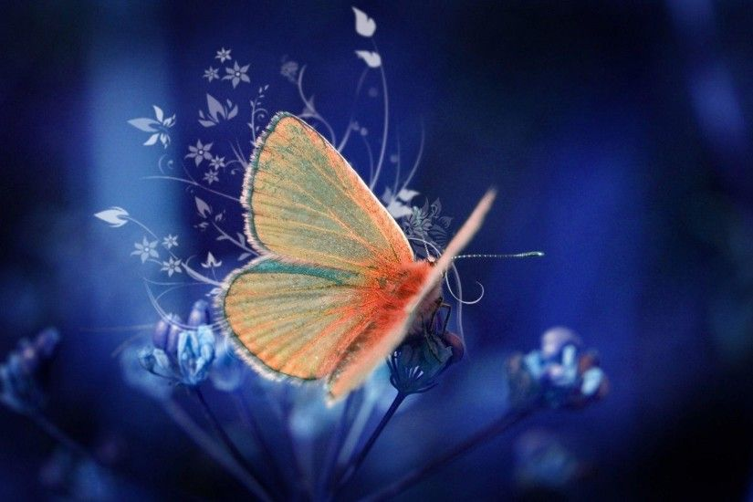File Name : Butterfly Wallpaper HD 1920×1080: Free Download .