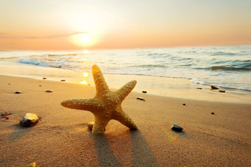 Wonderful Starfish Wallpaper 1065