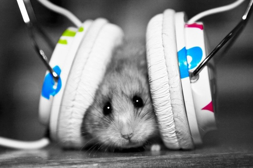 Preview wallpaper funny, music fan, music, little, hamster 2048x1152
