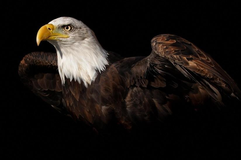 Full HD Bald Eagle Wallpapers