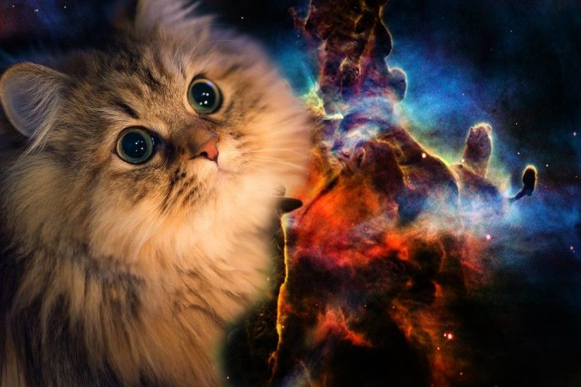 Space Cat Wallpapers High Quality ...