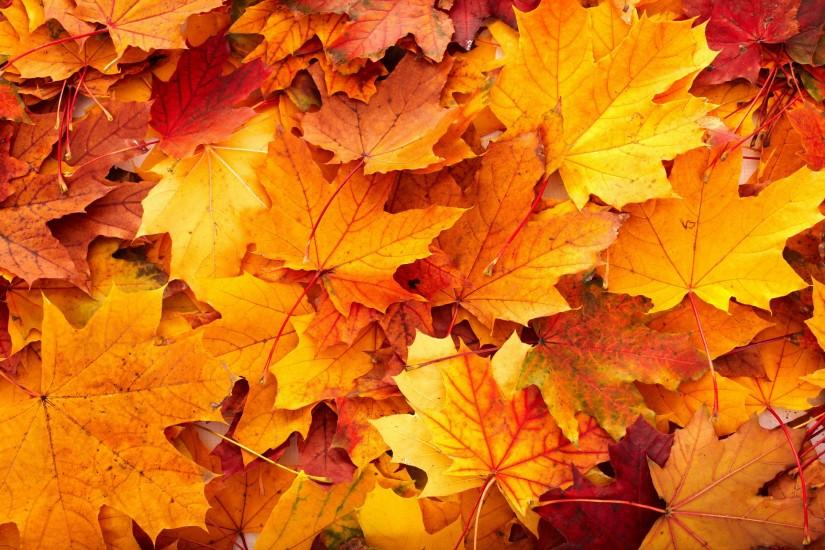 Fall Leaves HD Background Wallpapers