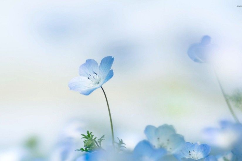 Blue Flower Wallpaper - Wallpapers Browse