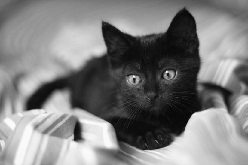 Black And White Cat Wallpaper |Cattpix.com