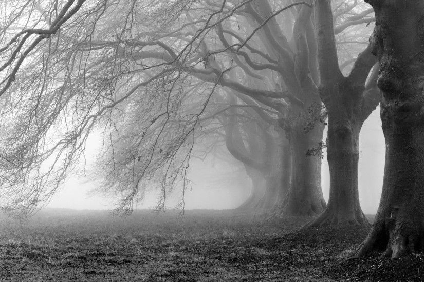Tree Black and White HD Picture Wallpapers.