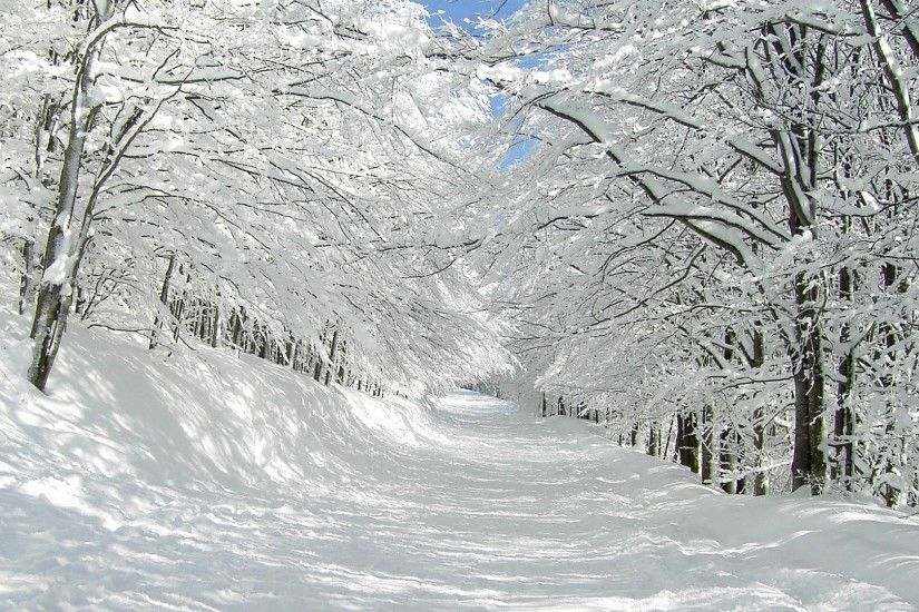 Forest Trails In The Snow HD Wide Wallpaper for Widescreen (27 Wallpapers)  – HD Wallpapers