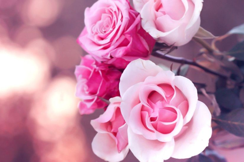 pink roses wallpapers. Â«Â«