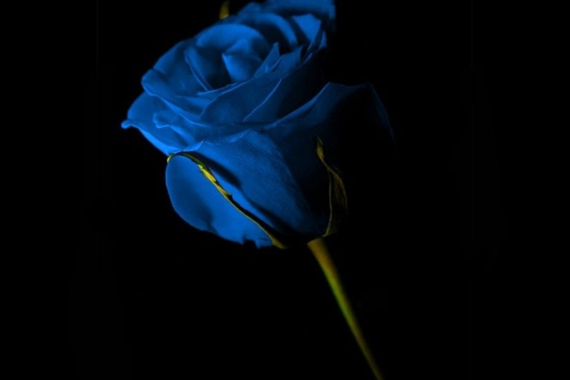 Black And Blue Rose Wallpaper