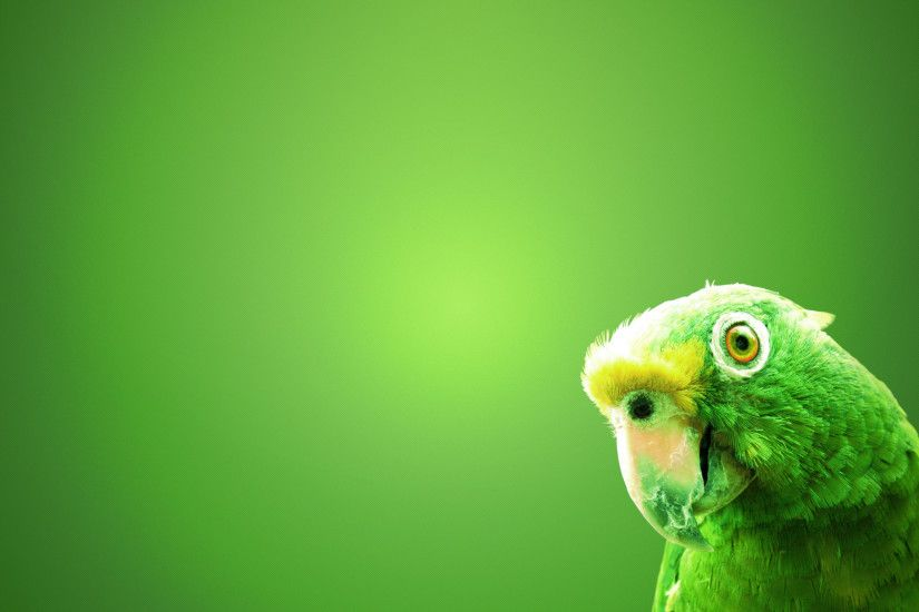 Green Parrot Wallpaper - http://www.56pic.com/animals-