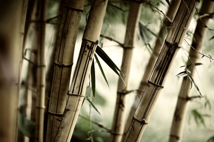 Wallpapers For > Japanese Background Bamboo