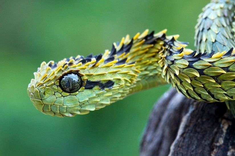 Full HD 1080p Snake Wallpapers HD, Desktop Backgrounds 1920x1080