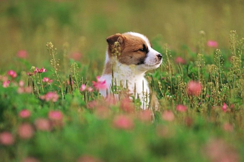 Pretty Dog Wallpapers - HD Wallpapers 76733