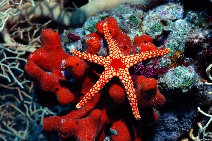 Water Fish Underwater Sea Starfish HD Free wallpaper thumb