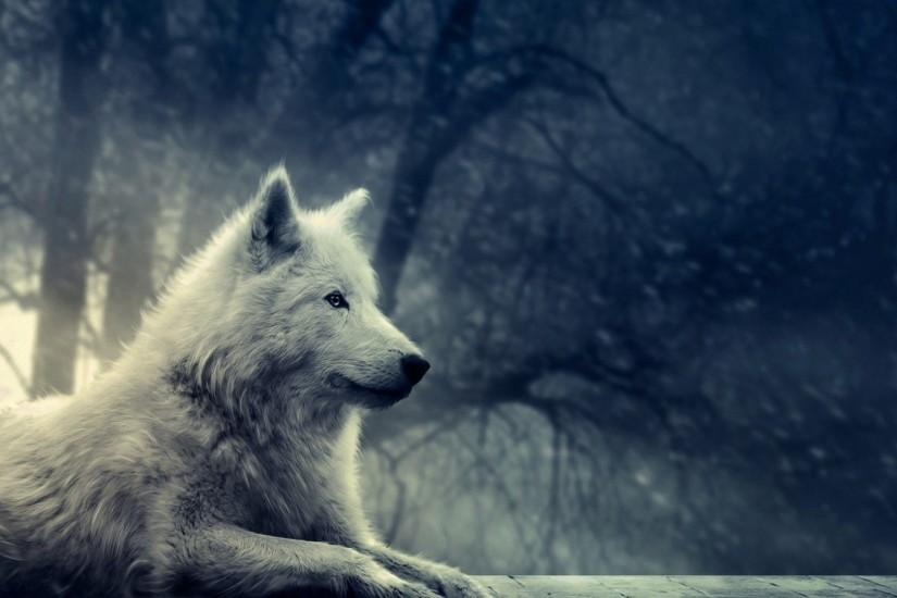 free download wolf backgrounds 1920x1080