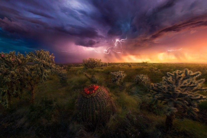nature, Landscape, Lightning, Storm, Shrubs, Grass, Sky, Clouds, Colorful,  Cactus, Wildflowers, Arizona Wallpapers HD / Desktop and Mobile Backgrounds