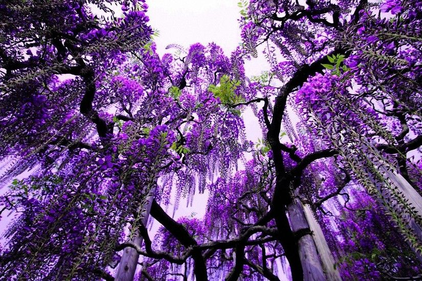 cool purple tree