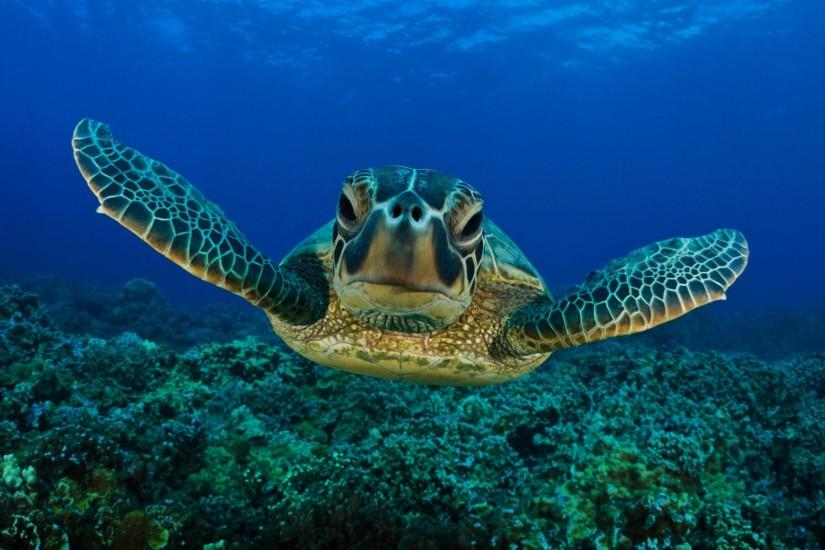 Cute Turtle Wallpapers Iphone Free Download Wallpapers Background 2560x1600  px 377.08 KB Animal Cartoon Baby Sea