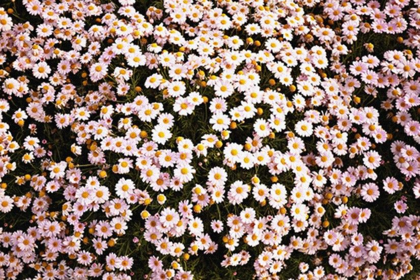 cute spring wallpapers for computers tumblr | ... for Vintage Flowers  Tumblr Backgrounds 4297