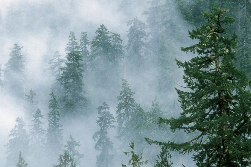 Explore and share Foggy Forest Wallpaper on WallpaperSafari