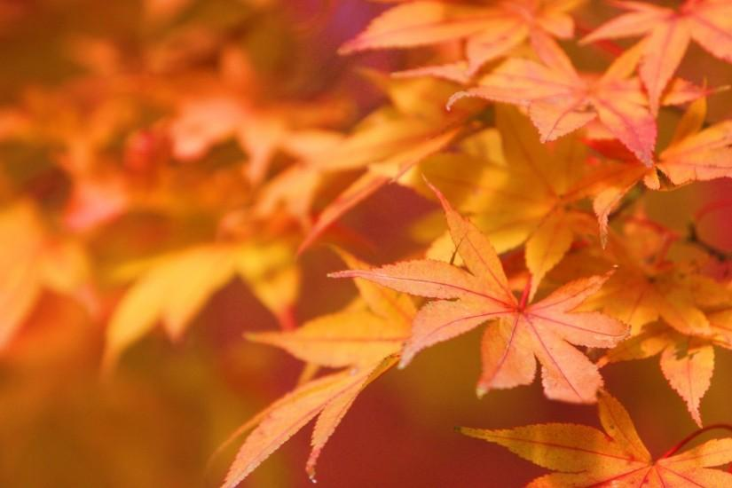 Autumn leaves - Autumn Wallpaper (22177663) - Fanpop