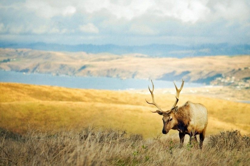 Photo: High Resolution Elk Photos, by Loriann Zang